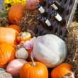 Decoration of fresh different pumpkin — Stock fotografie
