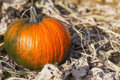 Big green orange pumpkin on autumn field — Stock Photo