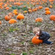 Little toddler boy on pumpkin field — Stock Photo #30577713