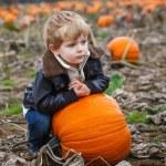 Little toddler boy on pumpkin field — Stock Photo