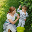 Young mother and her little son picking raspberries on farm in G — Stock Photo
