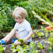 Adorable little blond boy picking salad in a garden. — Foto de Stock