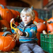 Little blond boy on pumpkin patch farm. — Stock Photo