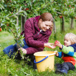 Adorable toddler boy of two years and his mother picking red app — Stock Photo #33329337
