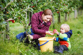 Adorable toddler boy of two years and his mother picking red app — Stock Photo