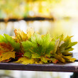 A colorful wreath of autumn leaves of maple. — Stock Photo
