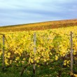 Mosel Vineyards region in autumn in Germany . — Stock Photo