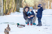 Mother and two little siblings boys feeding ducks in winter. — Foto Stock