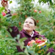 Stock Photo: Young wompicking red apples in orchard