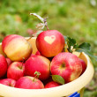 Yellow bucket with red ripe apples from orchard . — Stock Photo