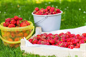 Ripe strawberry in bucket on green grass in summer — Stok fotoğraf