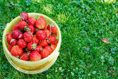 Ripe strawberry in bucket on green grass in summer — Zdjęcie stockowe