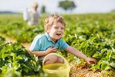 Happy little toddler boy on pick a berry farm picking strawberri — Foto de Stock