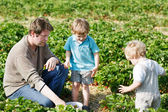 Family of three: father and twins boys on organic strawberry far — Stock Photo