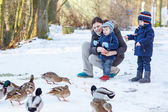 Mother and two little siblings boys feeding ducks in winter. — Stok fotoğraf