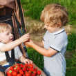 Stock Photo: Two little sibling boys on pick berry organic strawberry farm.