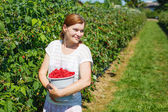 Young woman picking raspberries on pick a berry farm in Germany — Stok fotoğraf