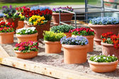 Beautiful different flowers in ceramic flowerpots in spring park — Foto Stock