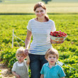 Mother and two little sibling boys on organic strawberry farm — Stock Photo #43782087