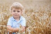 Happy little boy having fun in wheat field in summer — Stock Photo