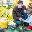 Young father and his little son planting seedlings in vegetable  — Stock Photo #46122951