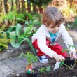 Adorable blond boy planting seeds and seedlings of tomatoes — Stock Photo #46123011