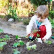Adorable blond boy planting seeds and seedlings of tomatoes — Stock Photo #46123253