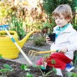 Adorable blond boy planting seeds and seedlings of tomatoes — Stock Photo #46123433