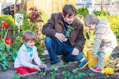 Two little boys and father planting seedlings in vegetable garde — Stock Photo