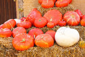 Different kinds of pumpkins on farm patch — Stock Photo