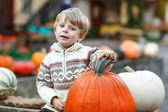 Little boy sitting on pumpkin patch — Stock Photo