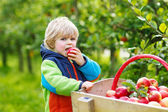 Happy blond toddler with wooden trolley full of organic red appl — Stock Photo