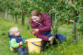 Young mother and adorable little toddler boy picking organic app — Stock Photo