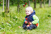 Adorable toddler boy picking and eating red apples in an orchard — Stock Photo