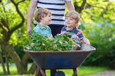 Two little boys having fun in wheelbarrow pushing by father — Stock Photo