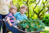 Two little boys having fun in a wheelbarrow pushing by mother — Stock Photo
