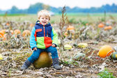 Toddler boy having fun sitting on huge  halloween pumpkin  — Stock Photo