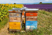 Bee hives on lavender fields, near Valensole, Provence. — Stock Photo