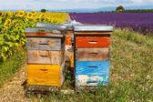 Colmenas de abejas en campos de lavanda, cerca de valensole, provence. — Foto de Stock