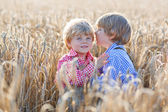 Two little sibling boys having fun and speaking on yellow wheat  — Stock Photo