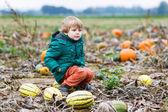 Toddler boy having fun sitting on huge  halloween pumpkin  — Stock Photo