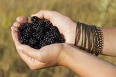 Blackberries in the hands — Stock Photo