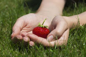 Appetizing strawberry in hands — Stock Photo