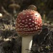 Snail on mushrooms — Stock Photo