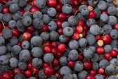 青と赤の果実 — ストック写真