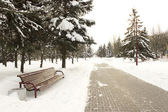 Sidewalk in the snow-covered park in winter — Stock Photo