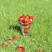 Red juicy strawberries in glass on grass — Stock Photo