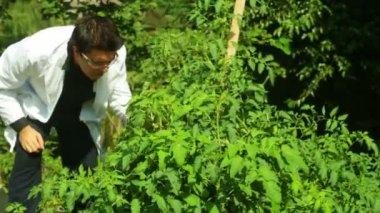 Botanik pflanzen wissenschaft wissenschaftler — Stockvideo