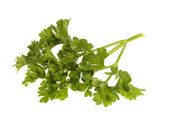 Sprig of Fresh Parsley — Stock Photo