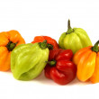 Scotch Bonnet Chillies - Stock Photo